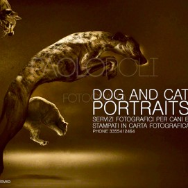 dog-and-cats-potraits